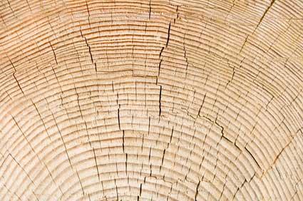 Uporaba lesa